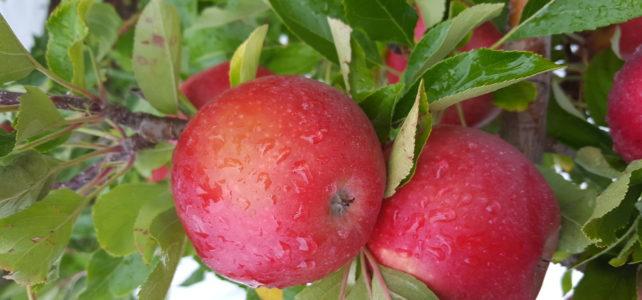 Pipfruit Foliar Nutrition Programme 2015