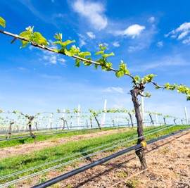 Grape Nutrition – Happy Vines, Happy Wines!