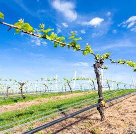 Grape Nutrition – Happy Vines, Happy Wines!